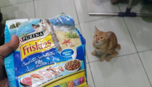 Hari ke-55. Akhirnya kami beli makanan kucing