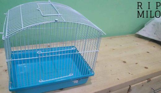 Hari ke-68 Sebenarnya Milo, hamster kami sudah mati T.T