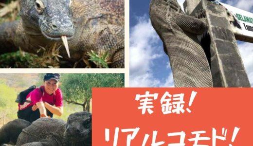 【FAM トリップラブアンバジョ編】コモド国立公園でコモドドラゴン+カロン島で巨大コウモリを見る