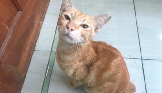 Hari ke-82 Si Opla, kucing kami kembali!!